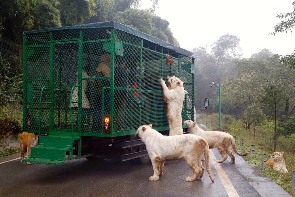 Lehe Ledu Wildlife Zoo China - Most Ferocious Zoo