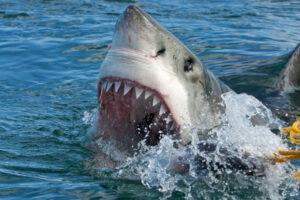 10 Most Dangerous Animals