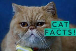 Facts About Cats You Need To Know