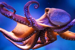 facts about the octopus