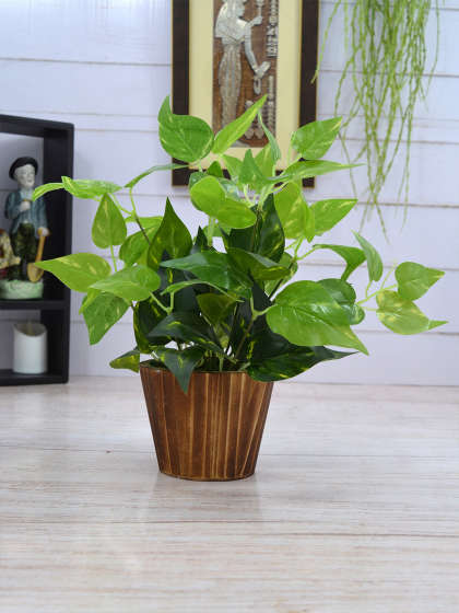Benefits Of Keeping Money Plant