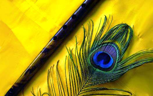 Benefits of Peacock Feather