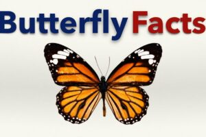 Fun Facts about Butterfly