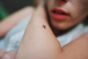 Reasons Why You're Mosquitoes Magnet