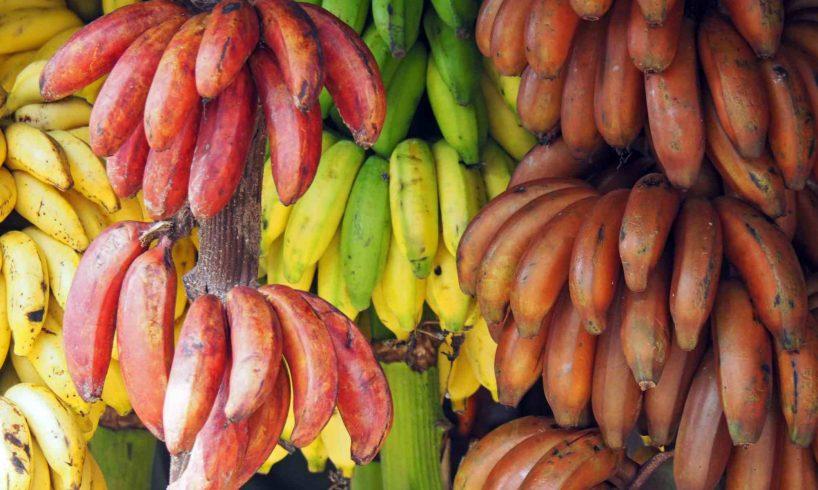 Which Colour Banana Do You Eat?