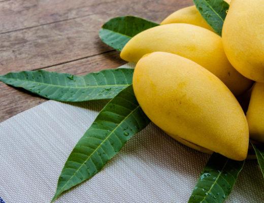 Mango Leaves Health Benefits