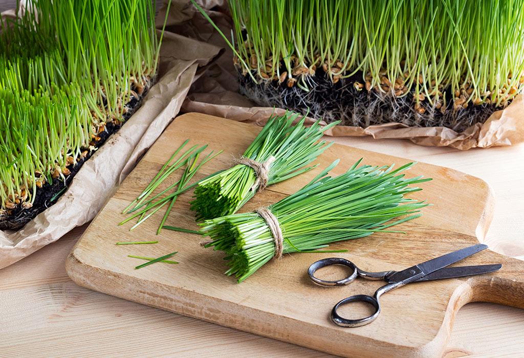 Wheatgrass Powder Benefits
