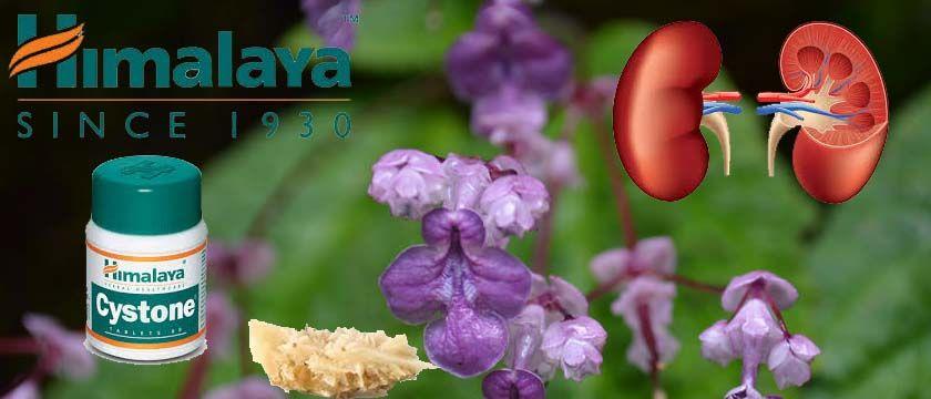 Himalaya Cystone Syrup Benefits